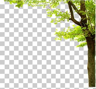 Nature Presentation Tree PNG