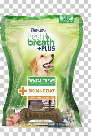 Dog Teeth Cleaning Dentistry Cat PNG