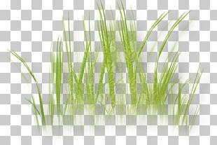 Herbaceous Plant Lawn Drawing Grass PNG
