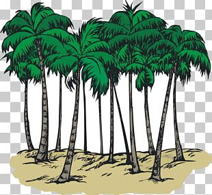 South Carolina Sabal Palm Arecaceae Coloring Book PNG