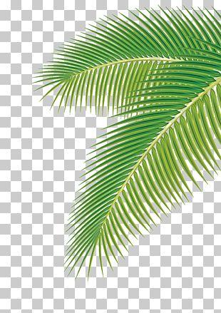 Arecaceae Leaf Euclidean PNG