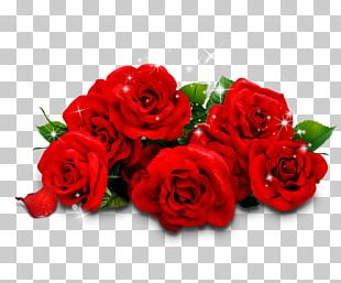 Beach Rose Garden Roses Red Flower PNG