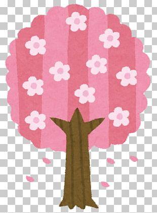 Cherry Blossom Hanami Illustration Spring PNG