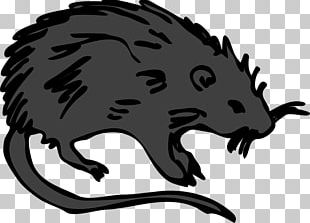 Brown Rat Mouse Rodent Laboratory Rat PNG