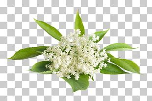 Elderflower Cordial Stock Photography PNG