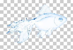 Water Fish Stock Photography Illustration PNG