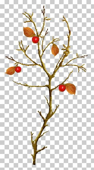 Autumn Leaves Twig Tree PNG