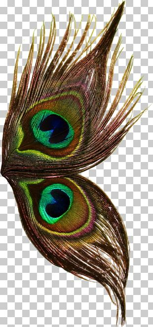Bird Peafowl Feather Wing Thepix PNG