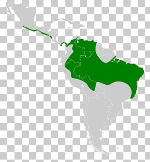 Latin America United States Caribbean South America Southern Cone Central America PNG