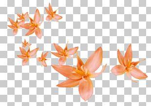 Petal Flower Leaf PNG