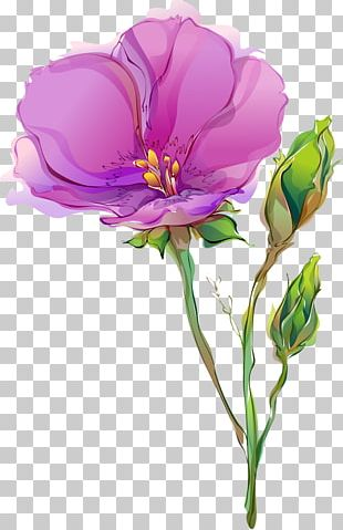 Cut Flowers Tulip Drawing Poppy PNG