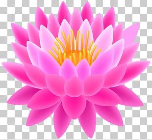 Sacred Lotus PNG