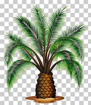 Palm Wine Washingtonia Filifera Washingtonia Robusta Palm Trees PNG