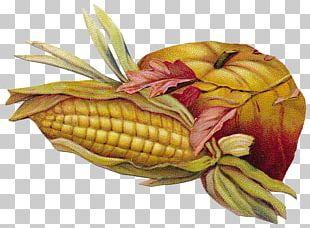 Last Chance Cemetery Oxford Cemetery Stoneking Cemetery Corn On The Cob PNG