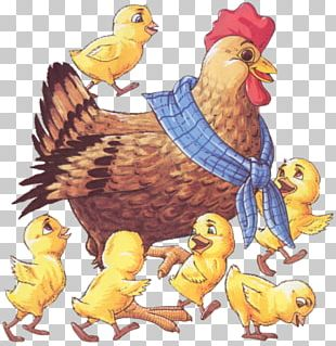 Rooster Chicken Kifaranga Hen Bird PNG