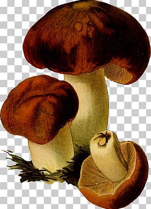 Edible Mushroom Fungus PNG