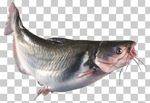 Oily Fish Bony Fishes 09777 Animal Source Foods PNG