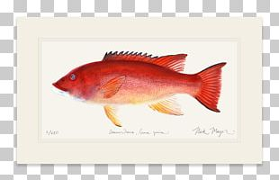 Northern Red Snapper Fish Products PNG