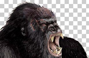 Hollywood King Kong Godzilla Rodan Film PNG