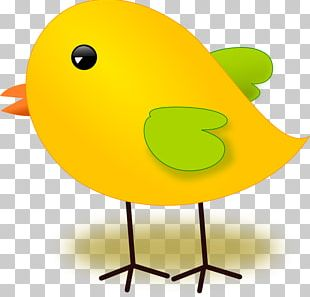 Chicken Meat Bird PNG