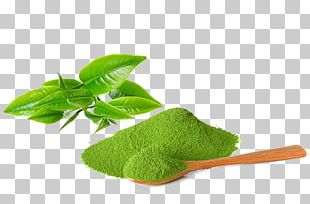 Matcha Green Tea Tea Plant Ice Cream PNG