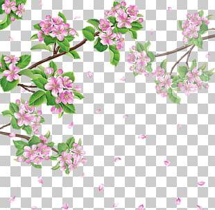 Spring Flower Cherry Blossom PNG