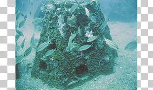 Coral Reef Neptune Memorial Reef Artificial Reef Marine Biology PNG