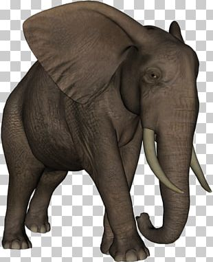 Indian Elephant African Elephant Elephantidae Tusk Animal PNG