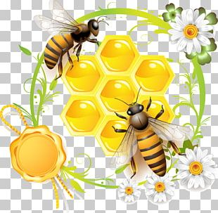 Bee Can Stock Photo Stock Photography PNG