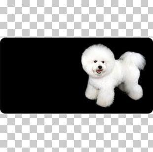 Puppy Dog Breed Bichon Frise Biewer Terrier Companion Dog