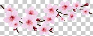 Cherry Blossom Pink Blossoms Resorts Icon PNG
