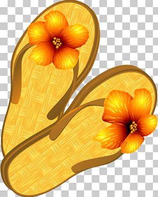 Slipper Dress Shoe Flip-flops Court Shoe PNG