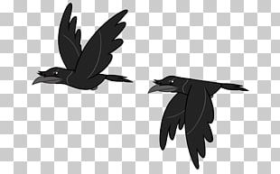 Bird Rook Crow PNG