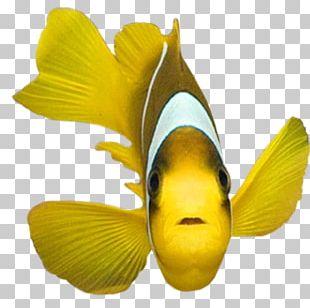 Shark Fish PNG