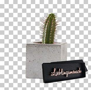Cactus Mathematics Berlin Calculation Giessen PNG
