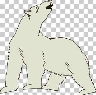 Polar Bear Arctic Fox Brown Bear PNG