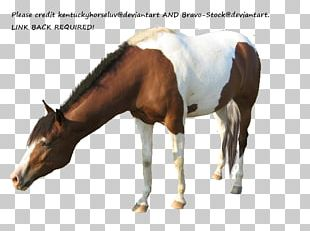 Mare American Paint Horse American Miniature Horse Appaloosa Mustang PNG