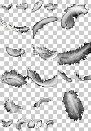 Feather Bird Black And White PNG