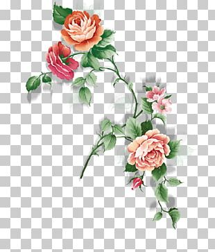 Garden Roses Rosa Chinensis Centifolia Roses Flower PNG