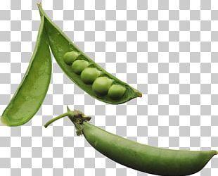 Pea Legume Plant Vegetable Phenotypic Trait PNG