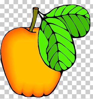 Apple Cucurbita Auglis Fruit PNG