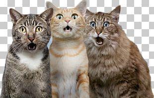 Cat Dog Pet PNG