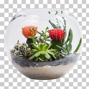 Flowerpot Succulent Plant Cactus Garden Bowl PNG