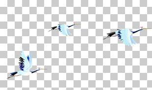 Bird Gulls Gongbi PNG