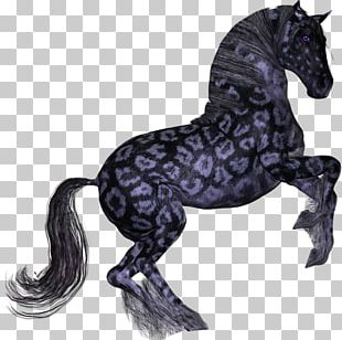 Mane Mustang Pony Friesian Horse American Paint Horse PNG