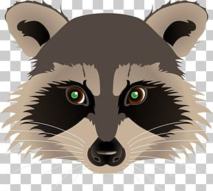 Raccoon Drawing Painting PNG