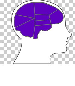 Outline Of The Human Brain PNG