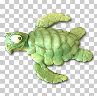 Green Sea Turtle Tortoise Flipper PNG