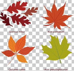 Euclidean Leaf Autumn Icon PNG