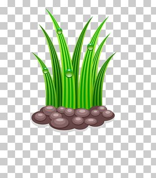 Gardening Watering Can PNG